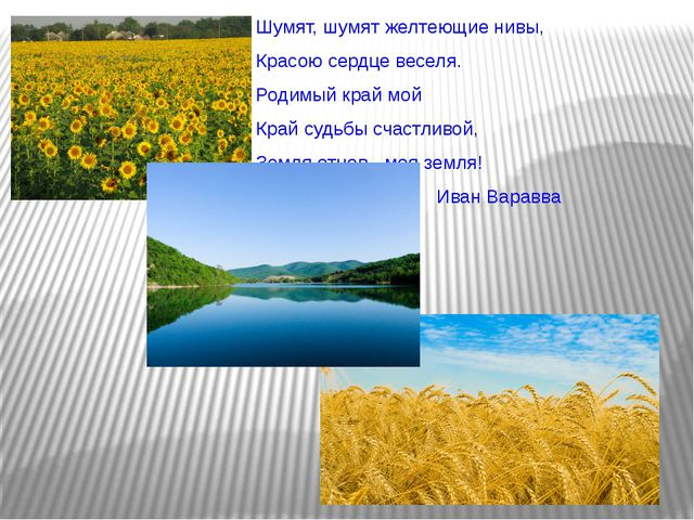 Шумят, шумят желтеющие нивы, Красою сердце веселя. Родимый край мой Край суд...