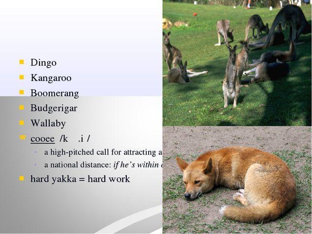 Dingo Kangaroo Boomerang Budgerigar Wallaby cooee /kʉː.iː/ a high-pitched cal...