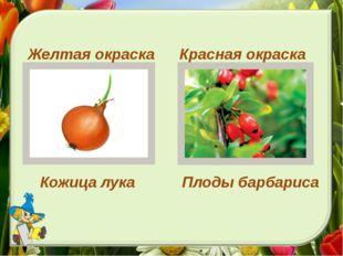Красная окраска Желтая окраска Кожица лука Плоды барбариса