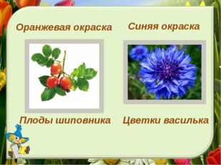 Синяя окраска Оранжевая окраска Плоды шиповника Цветки василька