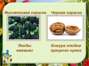 Черная окраска Фиолетовая окраска Ягоды ежевики Кожура плодов грецкого ореха
