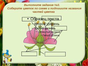 Выполните задание №3. Соберите цветок по схеме и подпишите названия частей цв