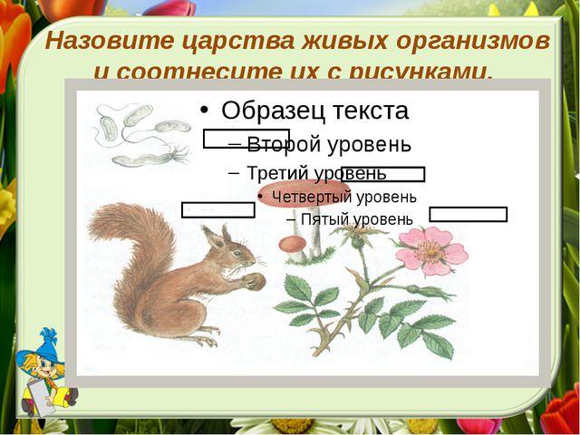 Назовите царства живых организмов и соотнесите их с рисунками.