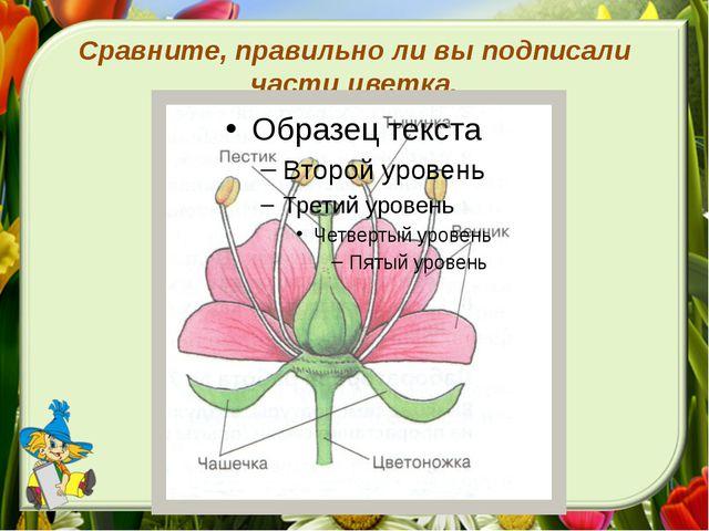 Сравните, правильно ли вы подписали части цветка.