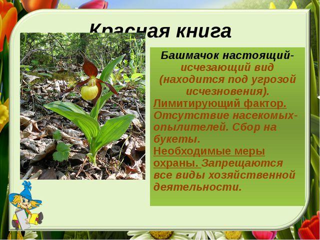 Красная книга Башмачок настоящий-исчезающий вид (находится под угрозой исчезн...