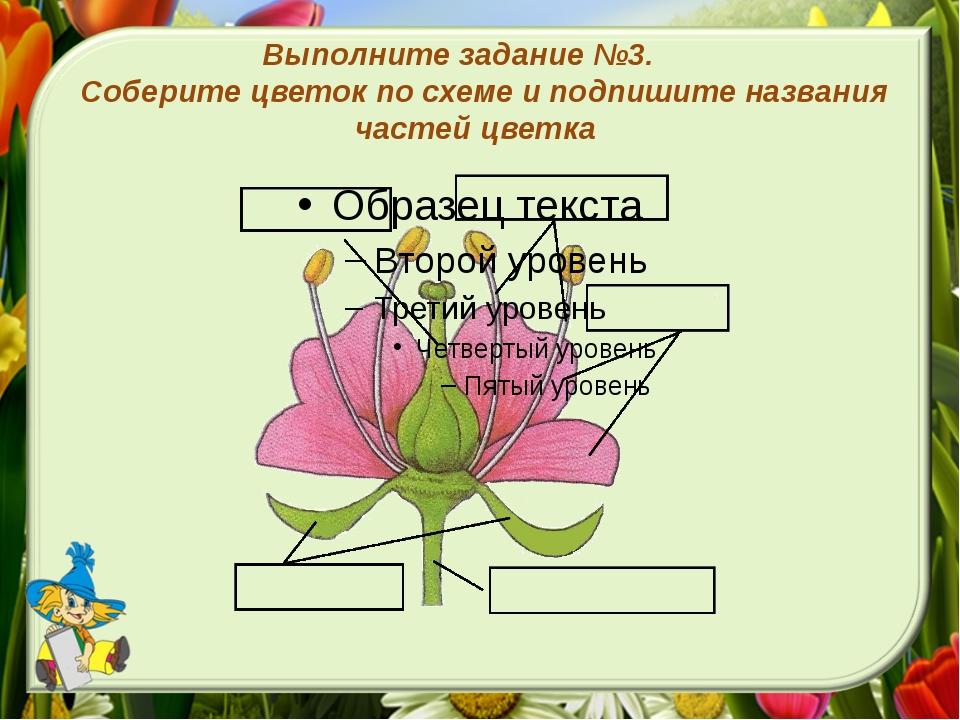 Выполните задание №3. Соберите цветок по схеме и подпишите названия частей цв...