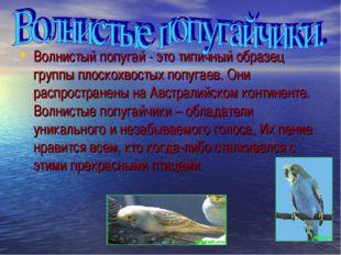 Волнистый попугай - это типичный образец группы плоскохвостых попугаев. Они р