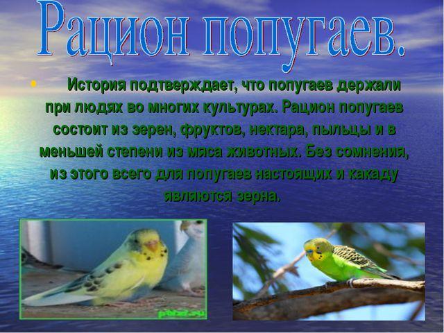 История подтверждает, что попугаев держали при людях во многих культура...