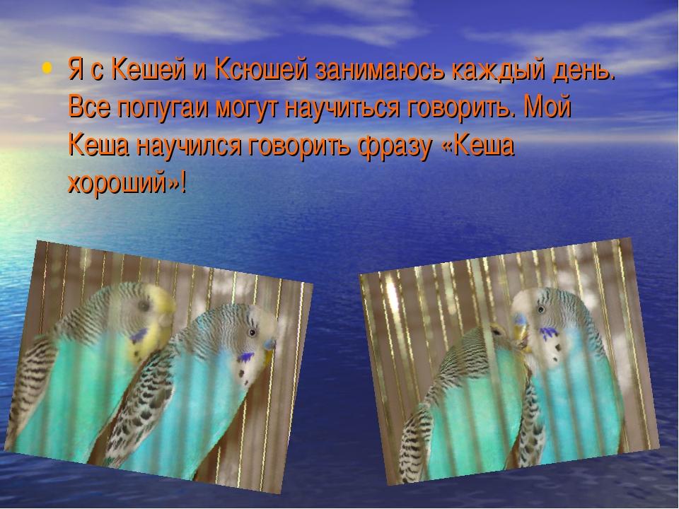 Я с Кешей и Ксюшей занимаюсь каждый день. Все попугаи могут научиться говорит...