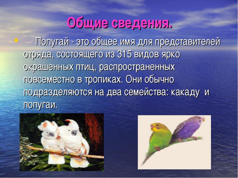 Общие сведения. Попугай - это общее имя для представителей отряда, состо...