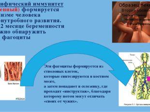 Неспецифический иммунитет (врожденный) формируется в организме человека с вн