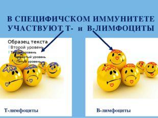 В СПЕЦИФИЧСКОМ ИММУНИТЕТЕ УЧАСТВУЮТ Т- и В-ЛИМФОЦИТЫ Т-лимфоциты В-лимфоциты