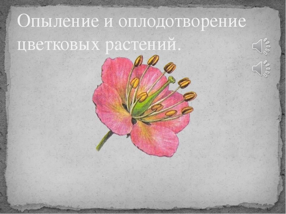 Опыление и оплодотворение цветковых растений.