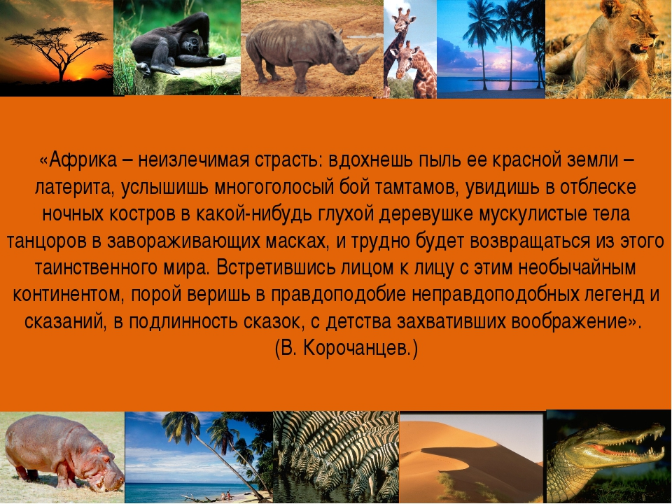 «Африка – неизлечимая страсть: вдохнешь пыль ее красной земли – латерита, усл...