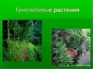 Тенелюбивые растения