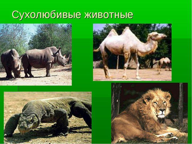 Сухолюбивые животные