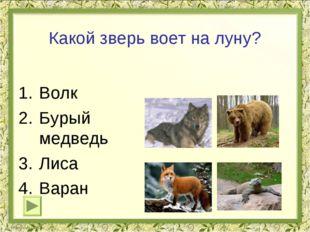 Какой зверь воет на луну? Волк Бурый медведь Лиса Варан
