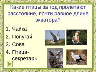 Какие птицы за год пролетают расстояние, почти равное длине экватора? Чайка П