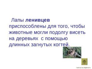 Лапы ленивцев приспособлены для того, чтобы животные могли подолгу висеть на