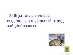 Зайцы, как и кролики, выделены в отдельный отряд зайцеобразных.