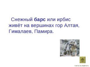 Снежный барс или ирбис живёт на вершинах гор Алтая, Гималаев, Памира.