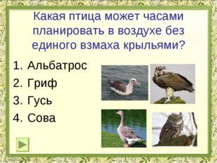 Какая птица может часами планировать в воздухе без единого взмаха крыльями? А