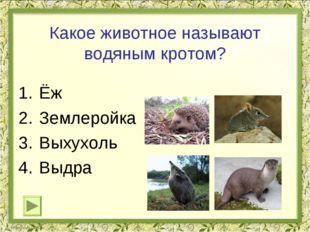 Какое животное называют водяным кротом? Ёж Землеройка Выхухоль Выдра