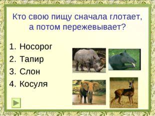 Кто свою пищу сначала глотает, а потом пережевывает? Носорог Тапир Слон Косул