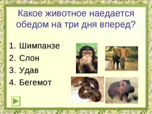 Какое животное наедается обедом на три дня вперед? Шимпанзе Слон Удав Бегемот