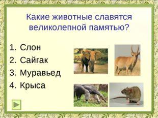 Какие животные славятся великолепной памятью? Слон Сайгак Муравьед Крыса
