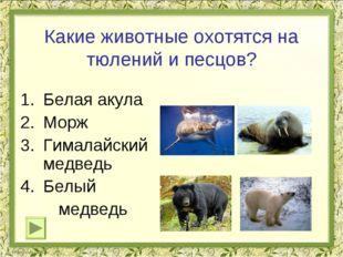 Какие животные охотятся на тюлений и песцов? Белая акула Морж Гималайский мед