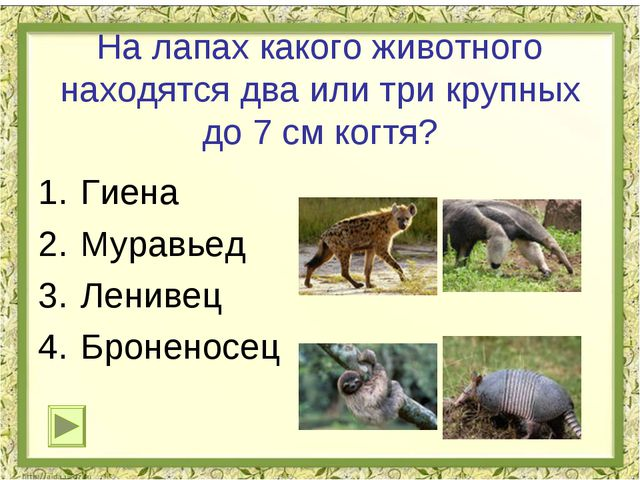 На лапах какого животного находятся два или три крупных до 7 см когтя? Гиена...