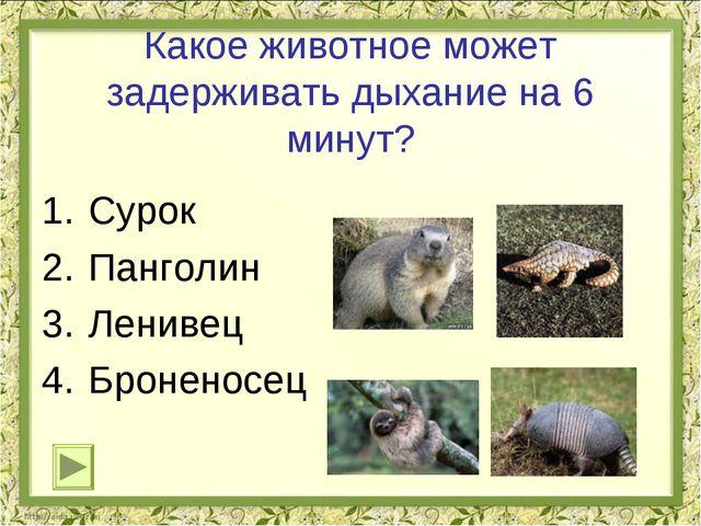 Какое животное может задерживать дыхание на 6 минут? Сурок Панголин Ленивец Б...