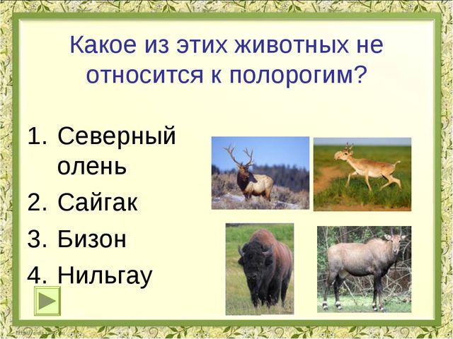 Какое из этих животных не относится к полорогим? Северный олень Сайгак Бизон...