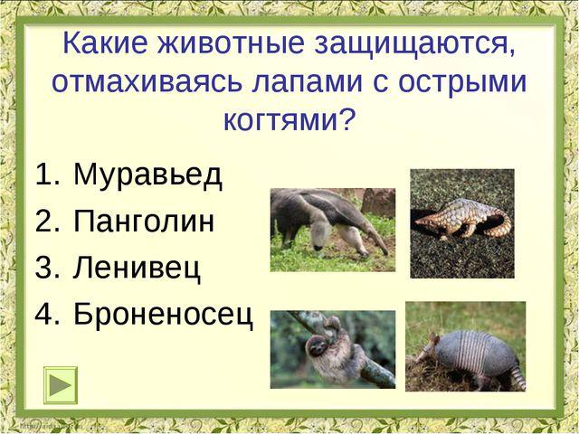 Какие животные защищаются, отмахиваясь лапами с острыми когтями? Муравьед Пан...