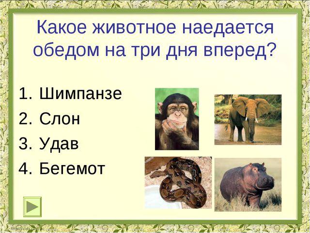 Какое животное наедается обедом на три дня вперед? Шимпанзе Слон Удав Бегемот...