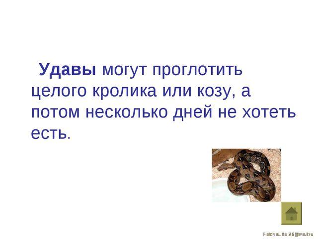 Удавы могут проглотить целого кролика или козу, а потом несколько дней не хо...