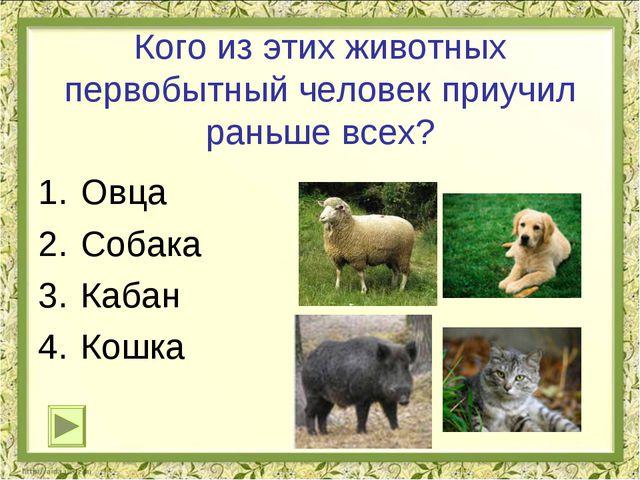 Кого из этих животных первобытный человек приучил раньше всех? Овца Собака Ка...