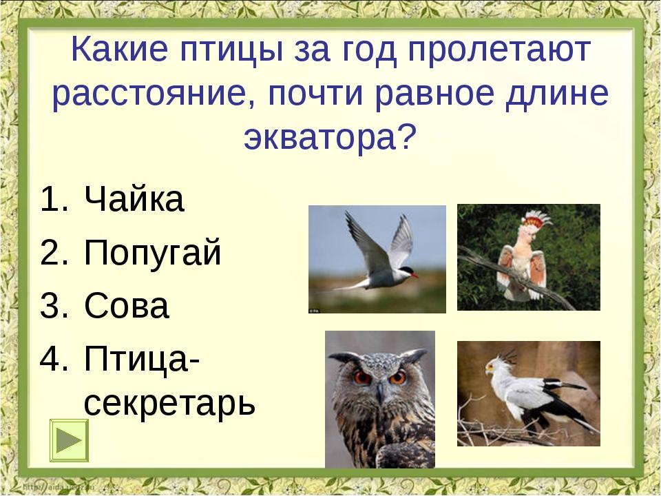 Какие птицы за год пролетают расстояние, почти равное длине экватора? Чайка П...