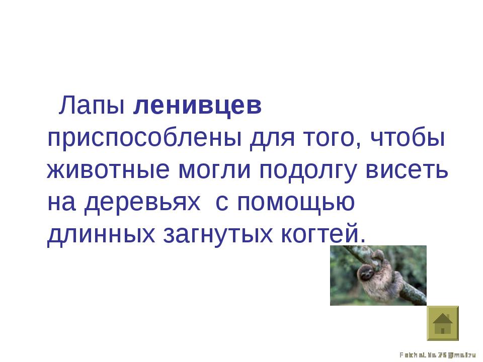 Лапы ленивцев приспособлены для того, чтобы животные могли подолгу висеть на...
