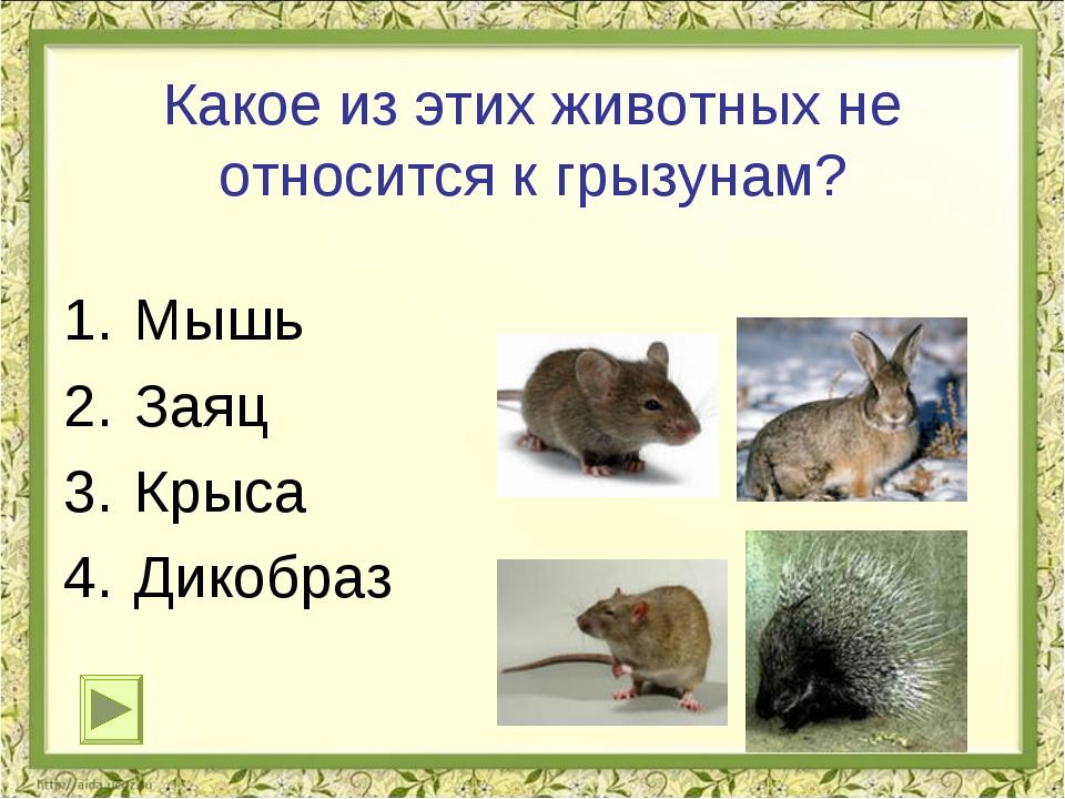 Какое из этих животных не относится к грызунам? Мышь Заяц Крыса Дикобраз