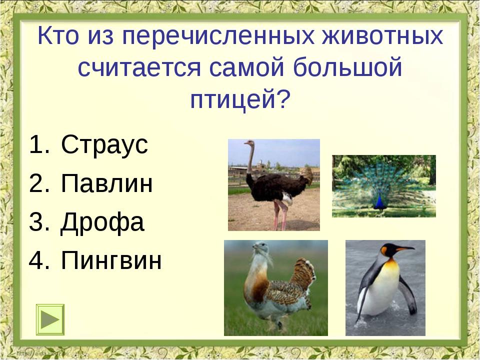 Кто из перечисленных животных считается самой большой птицей? Страус Павлин Д...