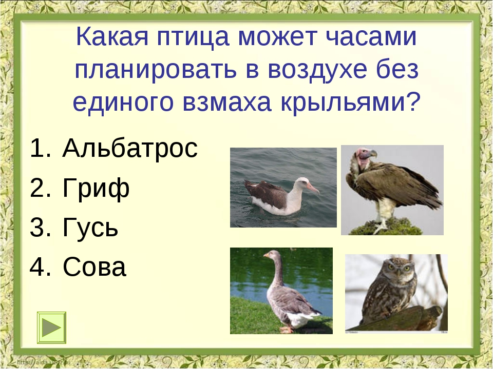 Какая птица может часами планировать в воздухе без единого взмаха крыльями? А...
