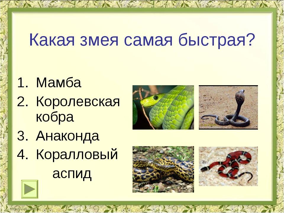 Какая змея самая быстрая? Мамба Королевская кобра Анаконда Коралловый аспид