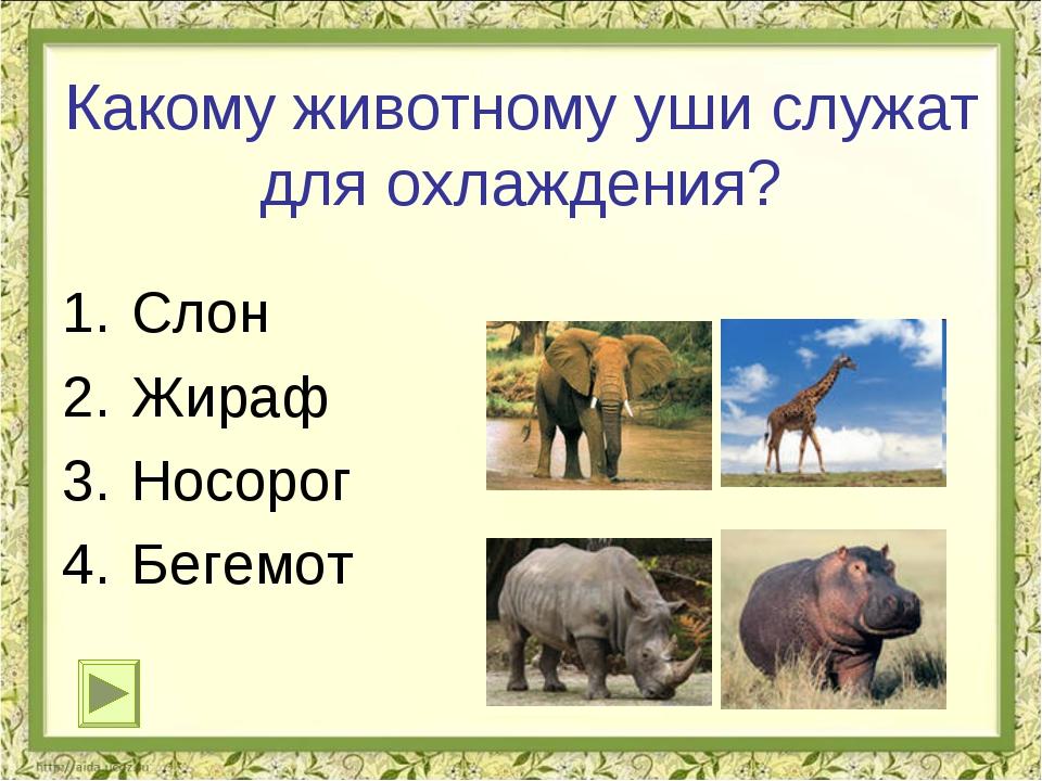 Какому животному уши служат для охлаждения? Слон Жираф Носорог Бегемот