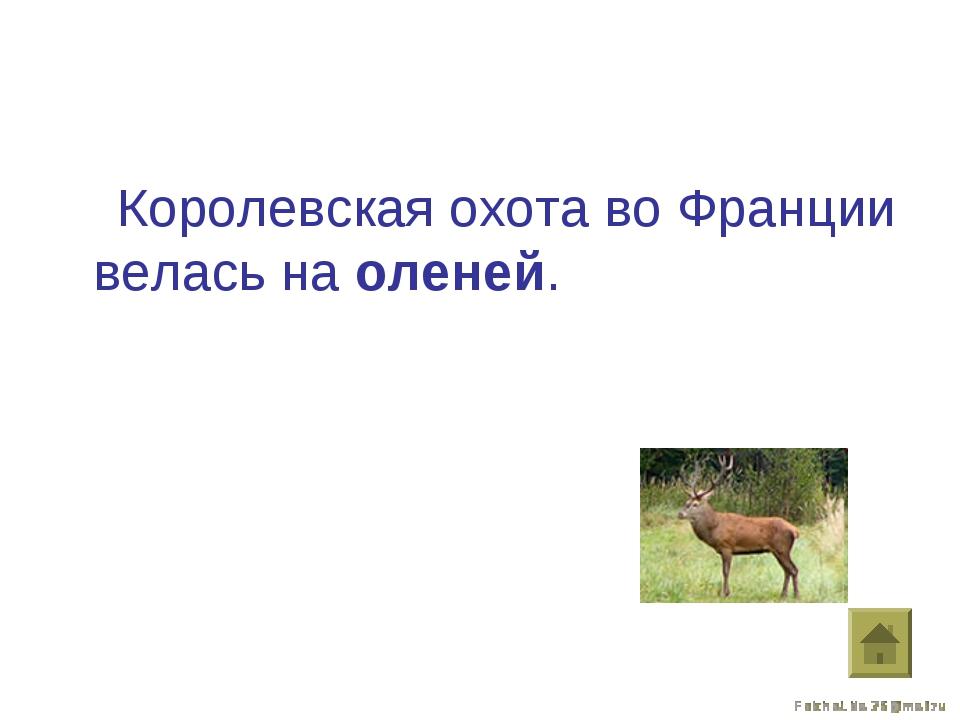 Королевская охота во Франции велась на оленей.