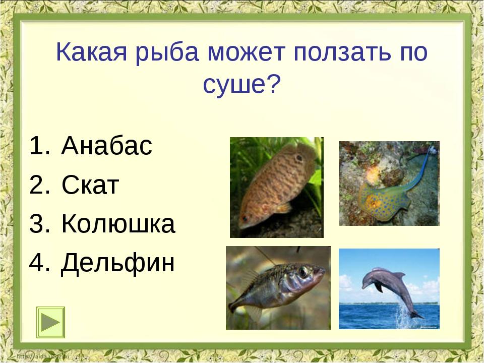 Какая рыба может ползать по суше? Анабас Скат Колюшка Дельфин
