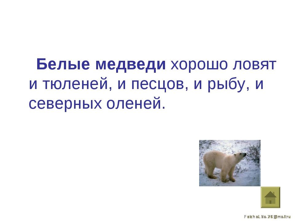 Белые медведи хорошо ловят и тюленей, и песцов, и рыбу, и северных оленей.