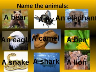 Match the words and the descriptions: ZOO the planetwe live on PARK all livin