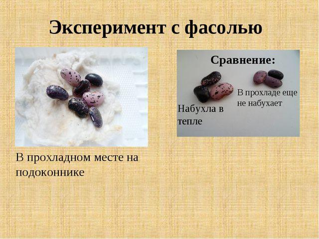 Эксперимент с фасолью В прохладном месте на подоконнике Набухла в тепле В про...